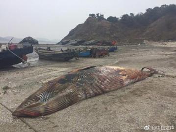 庄河黑岛发现7米长鲸鱼搁浅死亡