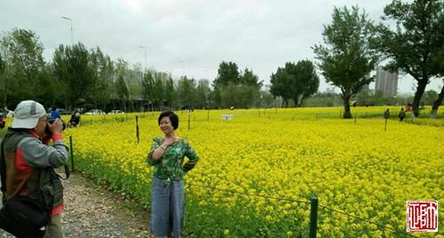 比如长白岛公园的油菜花