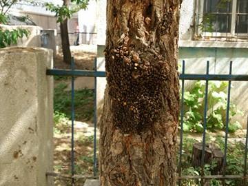 最近,她发现公园里的榆树上布满了虫子.