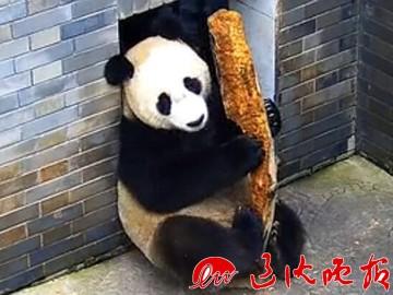 本月27日上午11点将在棋盘山风景名胜区内的沈阳森林动物园正式与广大